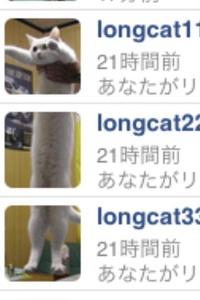 118706676longcat