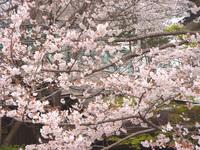 sakura20020302